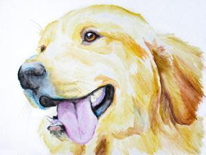 Golden Retriever by Allison Gray
