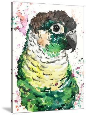Green Cheek Conure by Allison Gray
