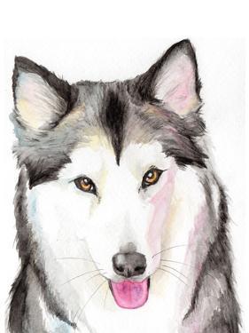 Husky by Allison Gray
