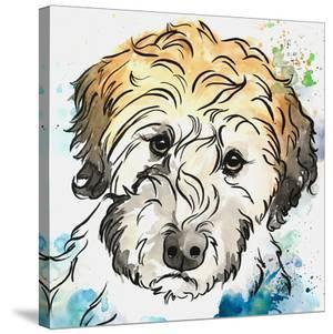 Labradoodle Begging by Allison Gray