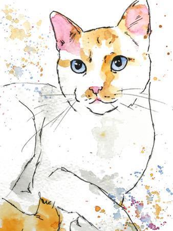 Orange Siamese by Allison Gray