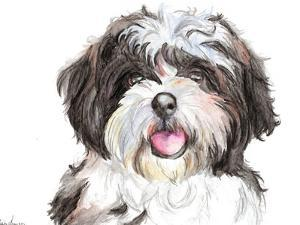 Shih Tzu by Allison Gray