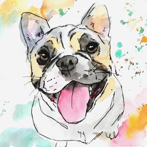 Tri Color French Bulldog by Allison Gray