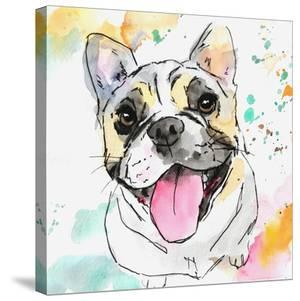 Tri Color French Bulldog by Allison Gray