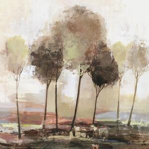 Illusion Land by Allison Pearce