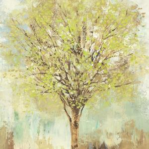 Jade Tree by Allison Pearce