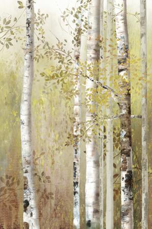 Serenity Birch
