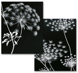 Allium Silhouette Art Print Set