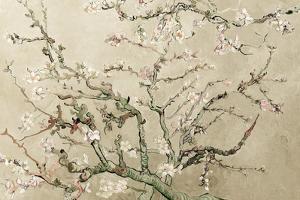 Almond Blossoms - Cream