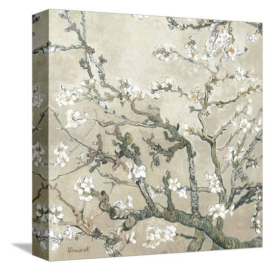 Almond Branches in Bloom, San Remy, c.1890 (tan)-Vincent van Gogh-Stretched Canvas Print