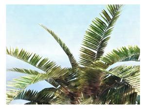 Pleasant Palms I by Alonzo Saunders