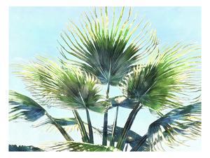 Pleasant Palms II by Alonzo Saunders