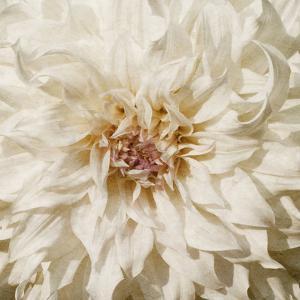 Wall Flower VIII by Alonzo Saunders