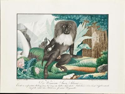 A Macaque, 1837