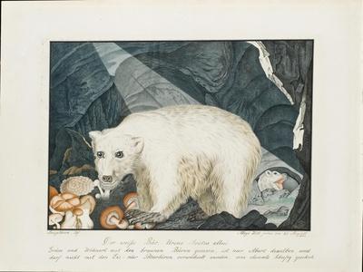 The White Bear, 1844