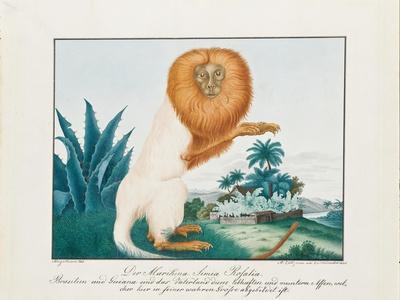 The White Saki, 1835