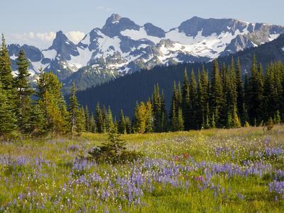 https://imgc.allpostersimages.com/img/posters/alpine-meadow-and-sarvent-glaciers-mount-rainier-national-park-washington-usa_u-L-PHAKMW0.jpg?p=0