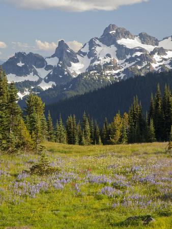 https://imgc.allpostersimages.com/img/posters/alpine-meadow-and-sarvent-glaciers-mount-rainier-national-park-washington-usa_u-L-PHAKNJ0.jpg?p=0