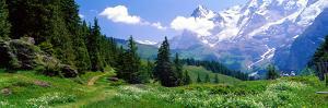 Alpine Scene Near Murren Switzerland