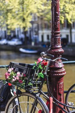 A Bicycle Decorated with Flowers by a Canal, Amsterdam, Netherlands, Europe by Amanda Hall