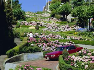 Driving Down Lombard Street, Russian Hill, California by Amanda Hall
