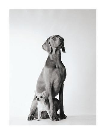 Max and Roxie by Amanda Jones