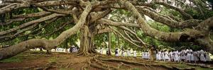 Sri Lanka, Kandy, Peradeniya Botanic Gardens; School Girls Pass by a Bodhi, or Pipal, Tree by Amar Grover