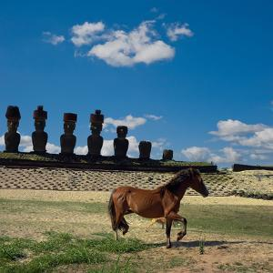 Freedom in Rapa Nui by Amateur photographer learning...