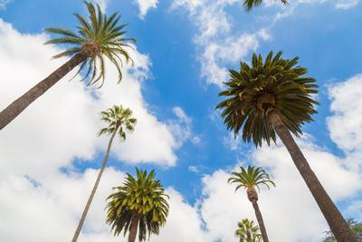 https://imgc.allpostersimages.com/img/posters/amazing-palm-tree-in-beverly-hills-california-usa_u-L-Q105M870.jpg?artPerspective=n