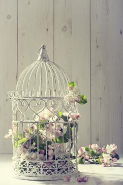 Bird Cage Filled with Apple Tree Blossom with Vintage Effect by Amd Images