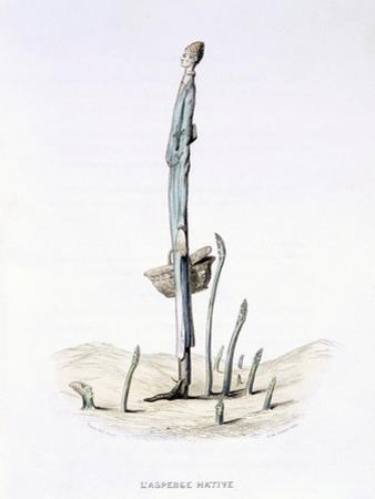The Hasty Asparagus, from 'L'Empire Des Legumes, Memoires De Curcurbitus'