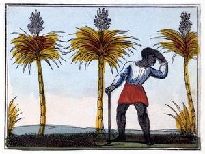 Cutting Sugar Cane, 1826 by Amelia Alderson Opie