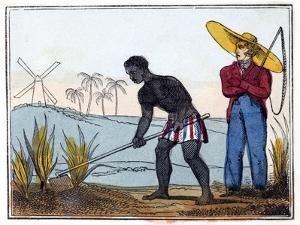 Hoeing, 1826 by Amelia Alderson Opie