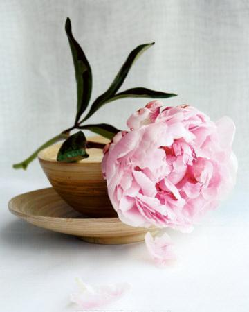 Peony by Amelie Vuillon