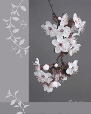 Plumtree Flowers by Amelie Vuillon
