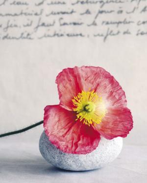 Poppy by Amelie Vuillon