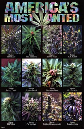 America's Most Wanted Pot Plants