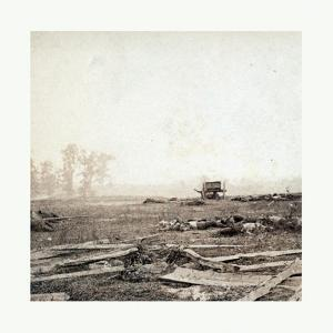 American Civil War: View on Battle Field of Antietam Where Sumner's Corps Charged the Enemy. Scene