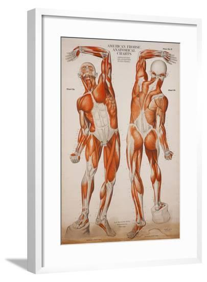 American Frohse Anatomical Wallcharts, Plate 2--Framed Giclee Print