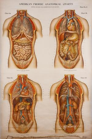 https://imgc.allpostersimages.com/img/posters/american-frohse-anatomical-wallcharts-plate-2_u-L-PSGM9H0.jpg?artPerspective=n