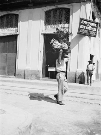 Flower vendor, Havana, c.1910 by American Photographer