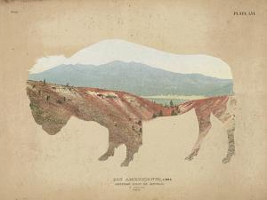 American Southwest Buffalo Distressed
