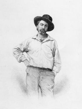 Walt Whitman, Frontispiece to 'Leaves of Grass', 1855 (Engraving) by American