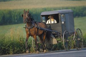 Amish man in typical coach, Pennsylvania, USA