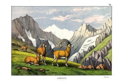 https://imgc.allpostersimages.com/img/posters/ammon-sheep-1860_u-L-PVC1880.jpg?p=0
