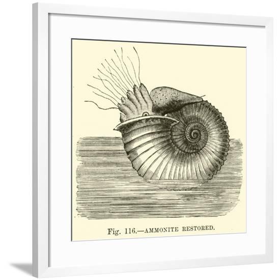 Ammonite Restored--Framed Giclee Print