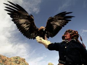 Takhuu Raising His Eagle, Golden Eagle Festival, Mongolia by Amos Nachoum