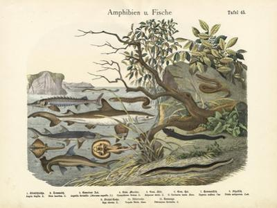 Amphibians and Fishes, C.1860