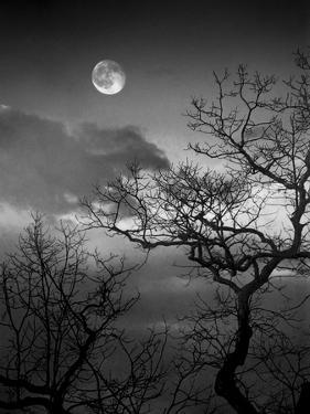 A Nearly Full Moon Sets over the Blue Ridge Mountains at Dawn by Amy & Al White & Petteway
