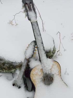 Ice Coats a Mandolin and a Guitar Left Outside as an Art Project by Amy & Al White & Petteway